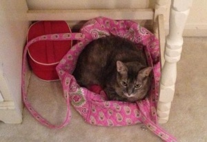 The cat's in the bag, baby!  This one changes her sleeping spot roughly biweekly, and almost on schedule too.